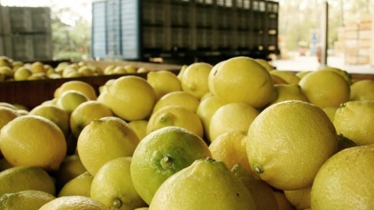 Estados Unidos anunció vía libre para el ingreso de limones argentinos