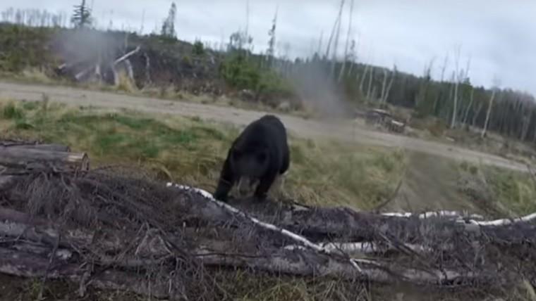 Cazador sobrevive al ataque de un oso negro