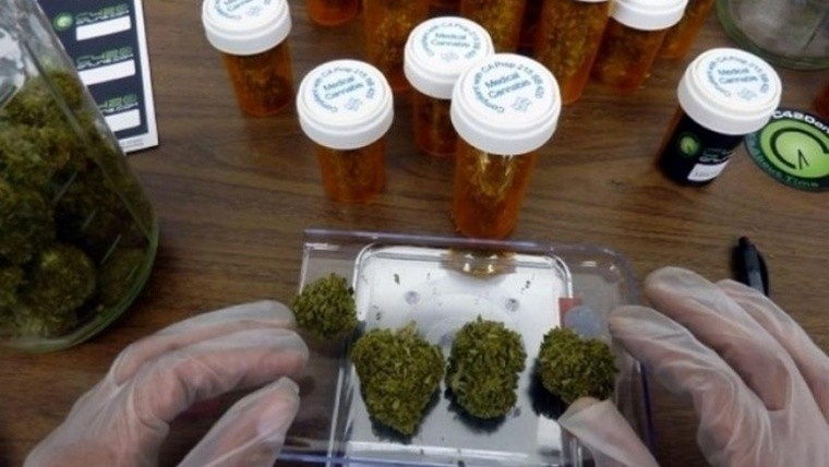 Gobierno reglamentó ley que permite uso medicinal del cannabis
