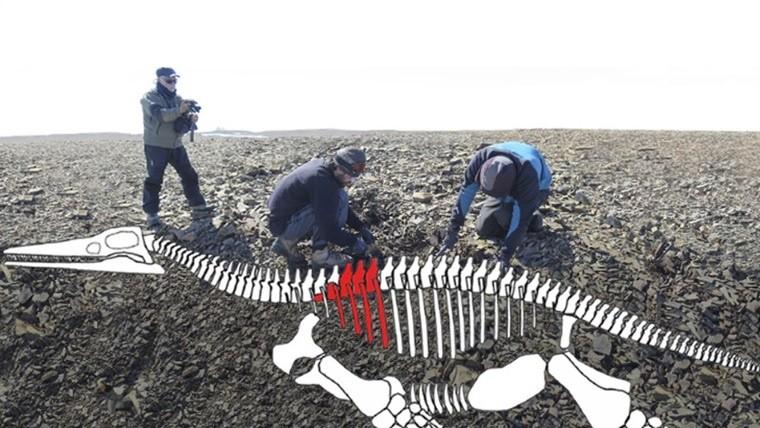 Reptil marino con 150 millones de años descubierto en la Antártida