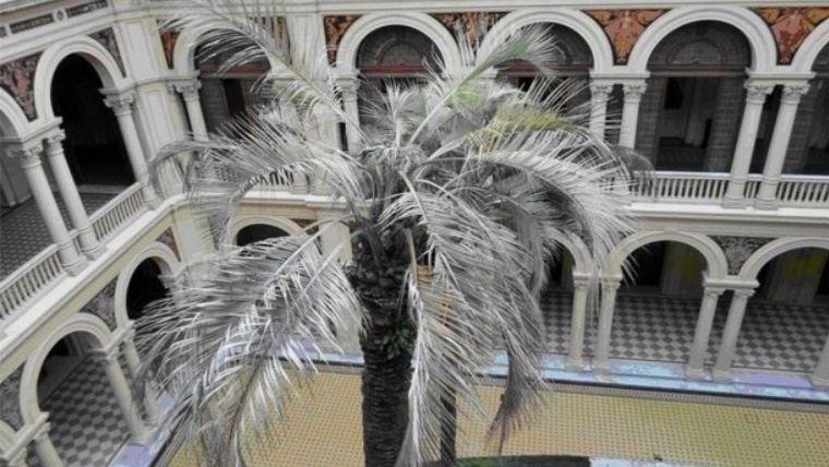 El Gobierno no comprará la palmera que costaba 235 mil pesos