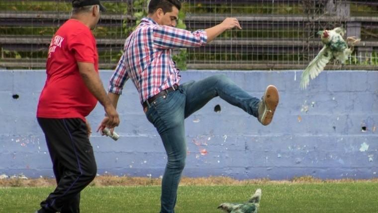 Dirigente desata la indignación por patear gallinas