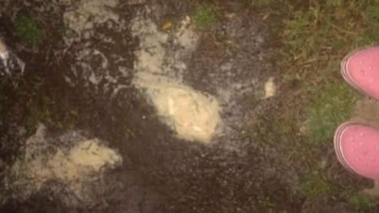 Una vecina fotografió lo que identificó como polenta con veneno.