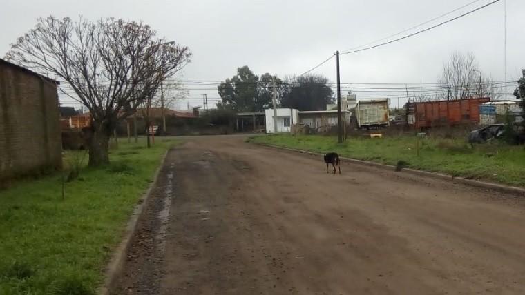 Decenas de perros afectados en la localidad del sur santafesino.