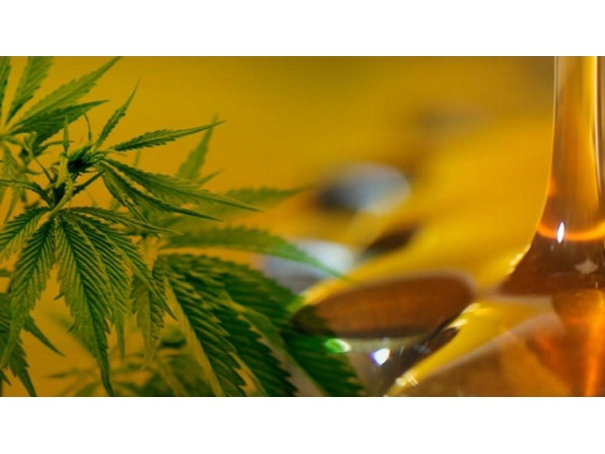Revocan permiso a una madre que cultiva cannabis para su hijo