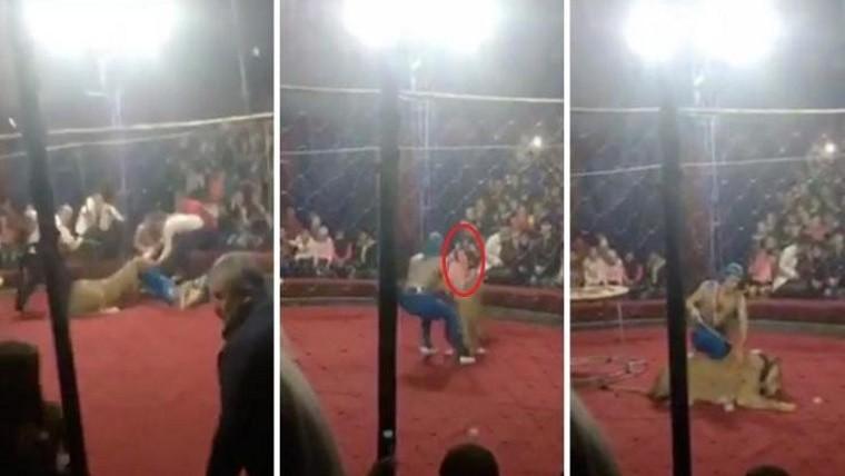 Una leona atacó salvajemente a una pequeña niña en un circo — Horror