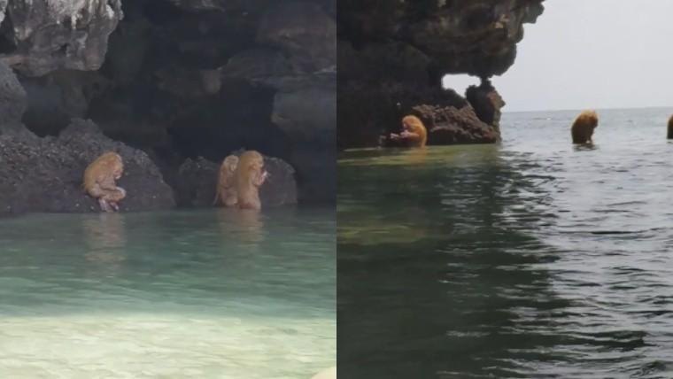 [Video] Ewoks impactaron a turistas en Tailandia con su música