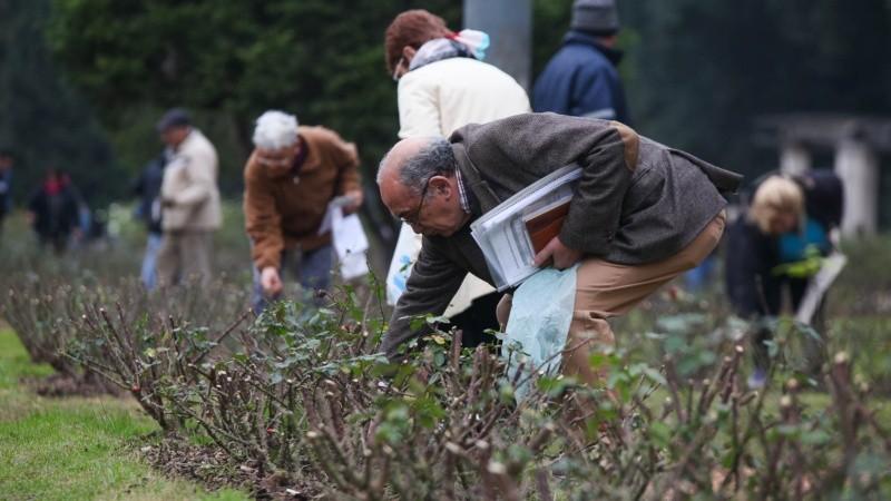 El Rosedal tiene alrededor de 40 variedades de rosas.