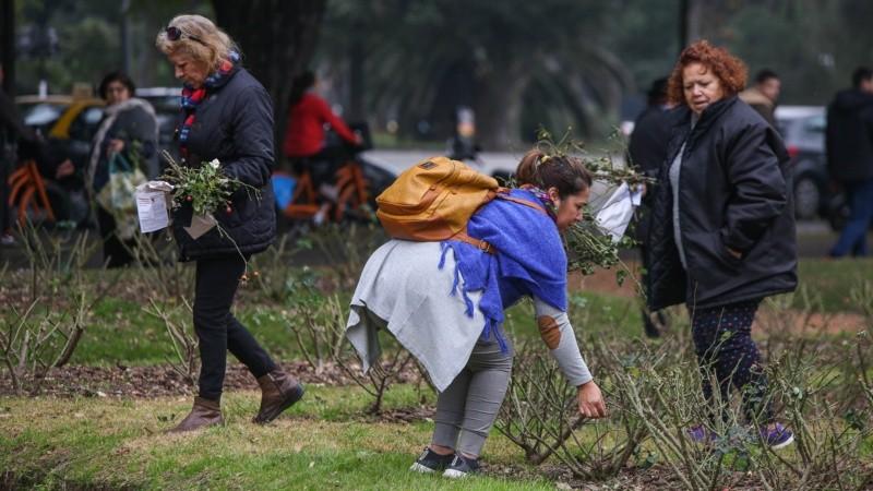 Muchas personas buscaron las ramitas de rosas que no fueron recogidas tras la poda y que sirven para plantar.