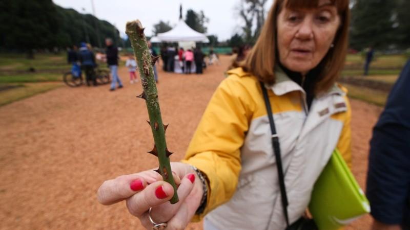 Una mujer muestra una rama entregada por el Municipio para poder plantar en su casa.
