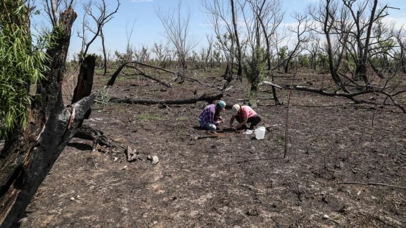 Suelos afectados por el fuego insistente en las islas.