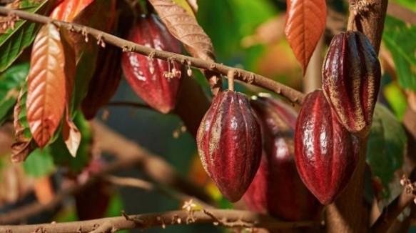 El nuevo tipo de chocolate — Ruby
